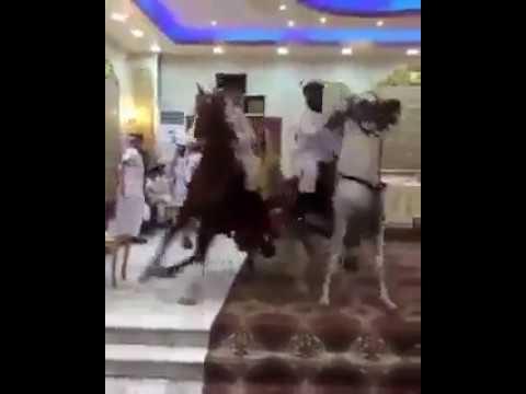 المغرب اليوم  - شاهد استعراض بالخيول داخل قاعة حفلة زفاف تثير جدلًا بين السعوديين
