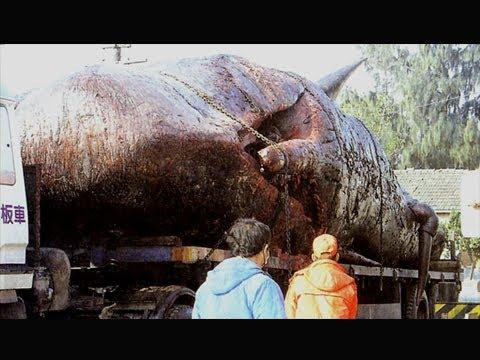 المغرب اليوم  - بالفيديو أمر لا يُصدق ماذا وجدوا في داخل بطن هذا الحوت العملاق