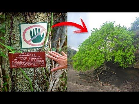 المغرب اليوم  - شاهد الشجرة يمكنها قتلك عند إقترابك منها