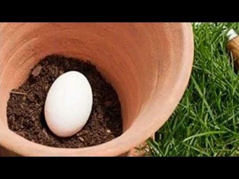المغرب اليوم  - بالفيديو قم بزرع بيضة في تربة حديقتك وما سيحدث بعد أيام سيكون مفاجأة لك