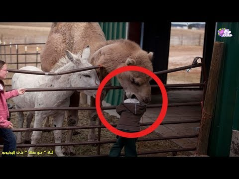 المغرب اليوم  - شاهد أغرب 5 أحداث وقعت في حدائق الحيوان وأكثرها رعبًا