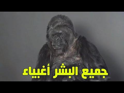 المغرب اليوم  - شاهد غوريلا تتحدث عن رأيها في الإنسان وفي كوكب الأرض