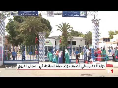 المغرب اليوم  - شاهد كثرة العقارب تهدد حياة السكان في القرى المغربية