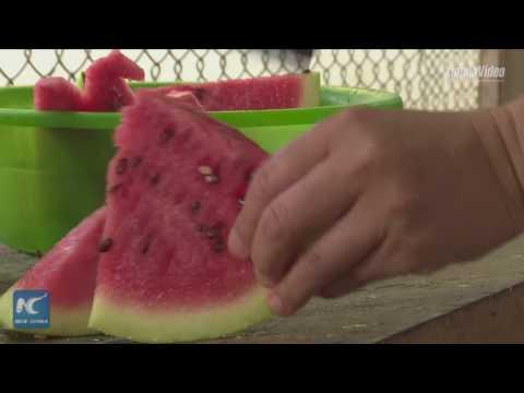 المغرب اليوم  - شاهد التكييف وشقق البطيخ أبرز طرق مواجهة الحر في حديقة الحيوان