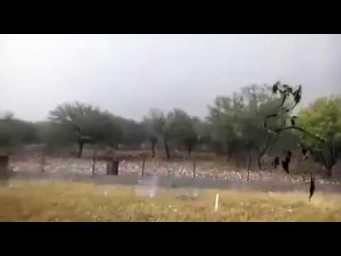 المغرب اليوم  - شاهد ثلوج بحجم كرة الغولف تقتل الماشية وتدمّر السيارات