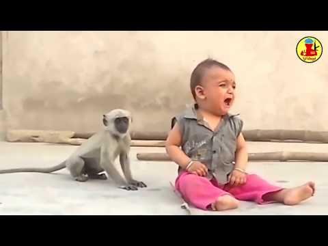 المغرب اليوم  - شاهد قرد طريف يحاول مداعبة طفل