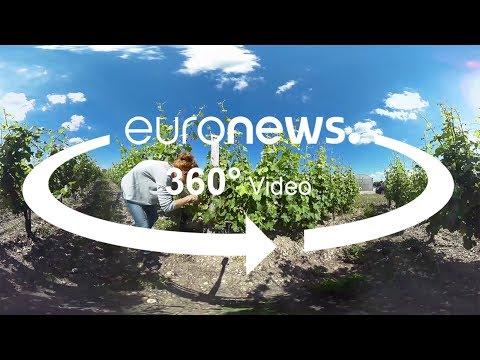 المغرب اليوم  - شاهد الباحثون يكثفون من التجارب عندما يُهدد تغير المناخ النبيذ الفرنسي