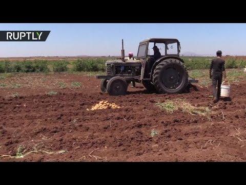 المغرب اليوم  - شاهد القطاع الزراعي يبدأ بالتعافي في درعا