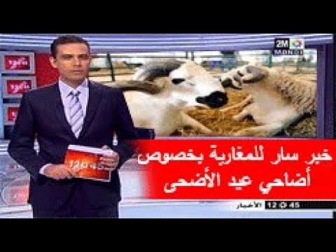 المغرب اليوم  - بالفيديو  زيادة عدد أضاحي العيد المعروضة في المغرب