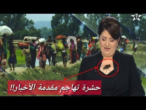 المغرب اليوم  - شاهد حشرة صغيرة تزعج مذيعة الأخبار أثناء النشرة