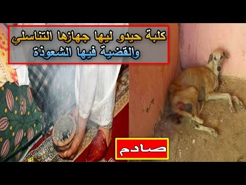 المغرب اليوم  - شاهد أشخاص يقومون بقطع رحم كلبة من أجل السحر والشعوذة