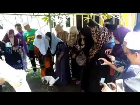 المغرب اليوم  - شاهد قط يشارك في جنازة رجل