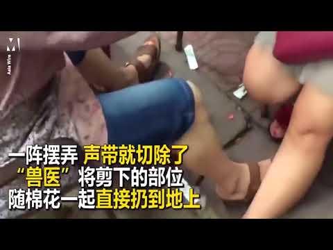 المغرب اليوم  - شاهد الصين تحقق مع طبيب يجرى عمليات لإخراس الحيوانات