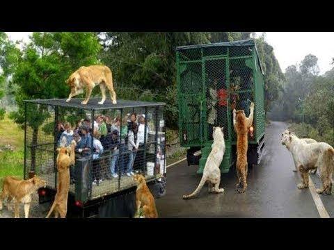 المغرب اليوم  - شاهد تصرفات عجيبة للحيوانات إذا لم تستطع الوصول للناس