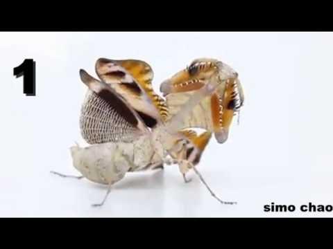 شاهد أندر وأجمل 5 حشرات في العالم