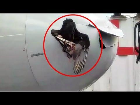 شاهد طائر ضخم كاد أن يتسبب في سقوط طائرة ركاب أميركية