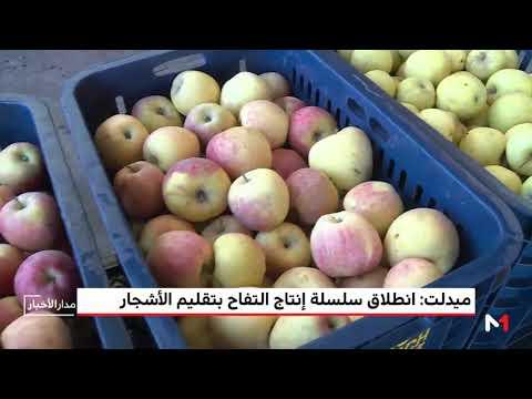 شاهد انطلاق سلسلة إنتاج التفاح