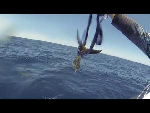 شاهد تحدي شد الحبل بين 3 صيادين وأسماك قرش