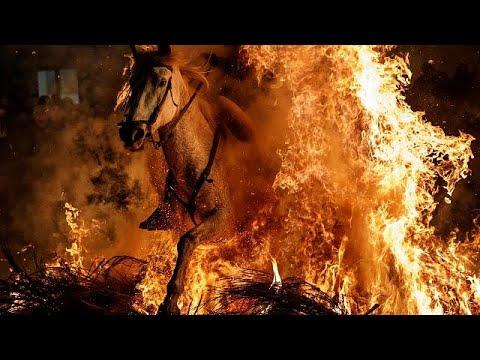 شاهد تطهير الخيول بالقفز عبر النار في إسبانيا