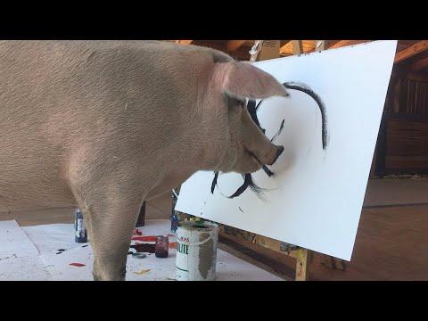 شاهد أنثى خنزير تصبح فنانة وتدشّن أول معرض فني للحيوانات