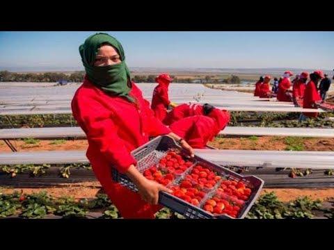 شاهد إسبانيا تستعد لاستقبال أزيد من 10 آلاف مغربي للعمل في هذا المجال