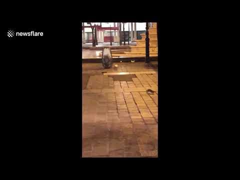 شاهد الفئران تغزو وسط العاصمة الفرنسية باريس