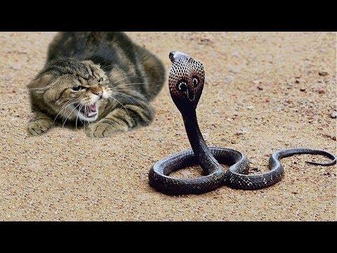 شاهد حيوانات شجاعة لا تخاف من أي شيء