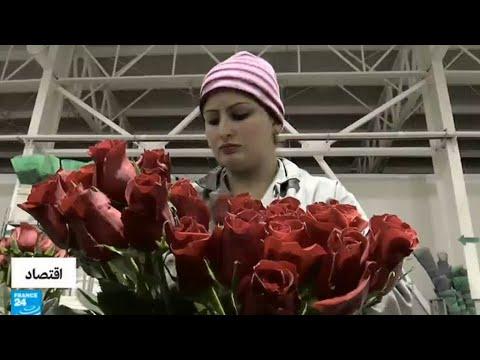 شاهد عيد الحب فرصة للعمل لإنتاج المزيد من الورود