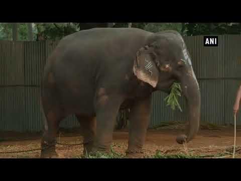 بالفيديو الفيل الفنان يعزف على آلة الهارمونيكا لجذب الزوار