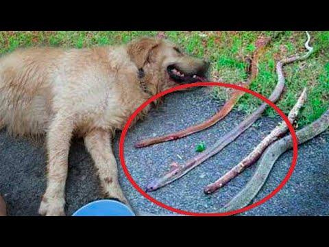 بالفيديو كلب قضى ليلتله يبكي وحدث عجيب في الصباح