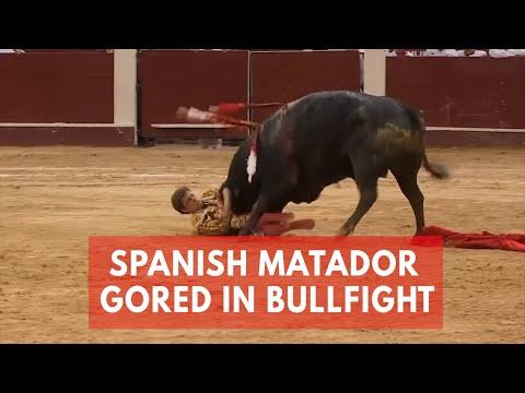 فيديو الماتدور الإسباني يحبس الأنفاس في حلقات مصارعة الثيران