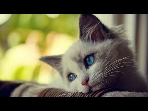 بالفيديو تعرف على داء القطط وما هو أسبابه وأعراضه وكيفية الوقاية منه