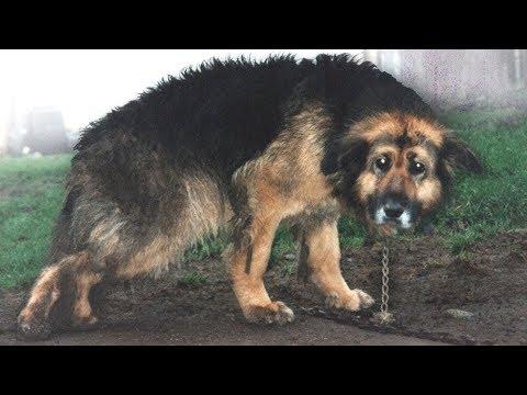شاهد إطلاق سراح كلب عقب إزالة السلاسل