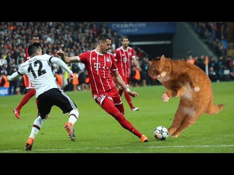قطة تفوز بجائزة رجل مباراة بيشكتاش وبايرن ميونخ