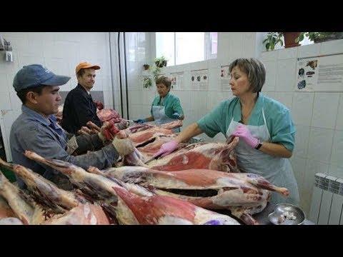 شاهد أوكرانيا تتفق مع المغرب لتصدير اللحوم والدواجن إلى المملكة