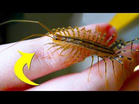 تعرف على الحشرة التي تتمنى وجودها في منزلك
