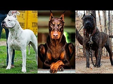 5 كلاب محظورة لن تستطيع شرائها