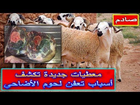 شاهدسبب تعفن لحوم  العيد الأضحى