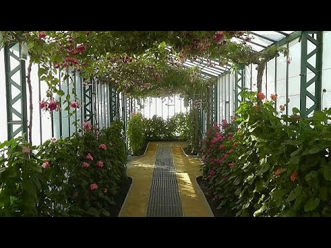 شاهد أزهار تزين قصر ملك بلجيكا المغلق