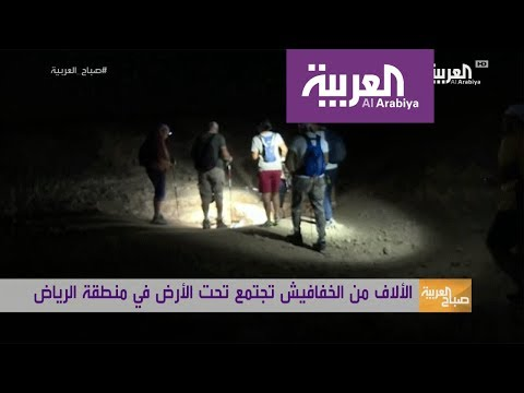 بالفيديو خفافيش في الرياض