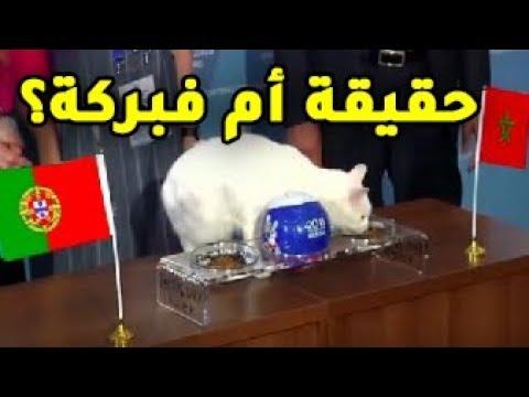 شاهد القط أخيل يتوقع فوز المغرب على البرتغال