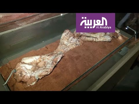 تعرف على تاريخ أضخم ديناصور في الأرجنتين