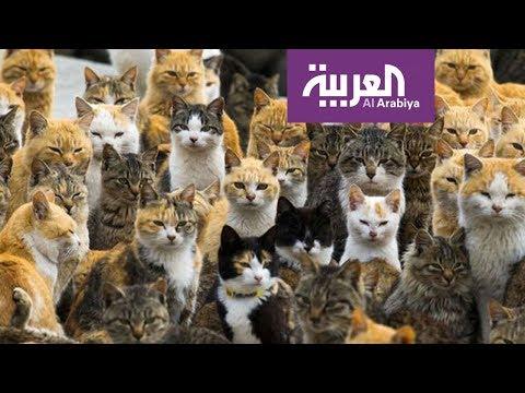 شاهد جزير القطط في اليابان يعيش فيها نحو 15 شخصًا فقط