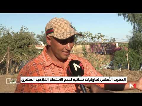 المغرب الأخضر يكشف دور الزراعة التضامنية في تطوير مستوى الفلاحين الصغار