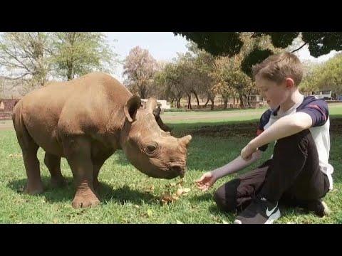 طفل صغير يتكفَّل بمُهمِّة حماية صغار حيوان وحيد القرن