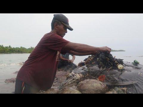 شاهد  حوت نافق يبتلع ستة كيلوغرامات من مخلفات البلاستيك في أندونيسيا