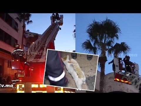 عناصر الوقاية المدنية تُنقذ قطًا من موت مُحقق في الدار البيضاء