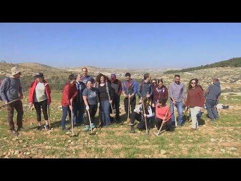 شاهد حاخام يساعد فلسطينيين على زراعة أشجار زيتون