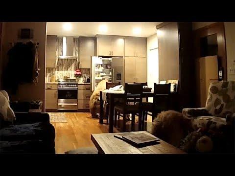 شاهد دببة تسرق طعامًا من داخل منزل في كاليفورنيا