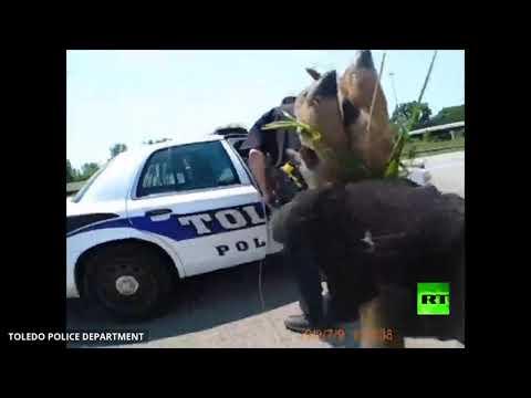 شرطة المرور في ولاية أميركية تنقذ غزالًا قرب طريق سريع